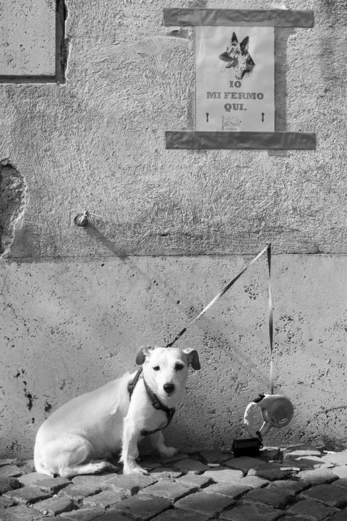 Dog Portrait - Image 0