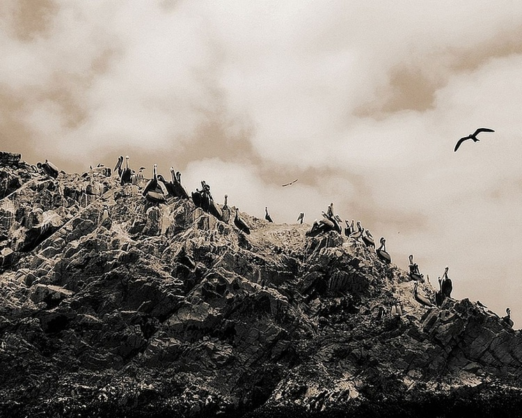 Humbolt birds - Image 0