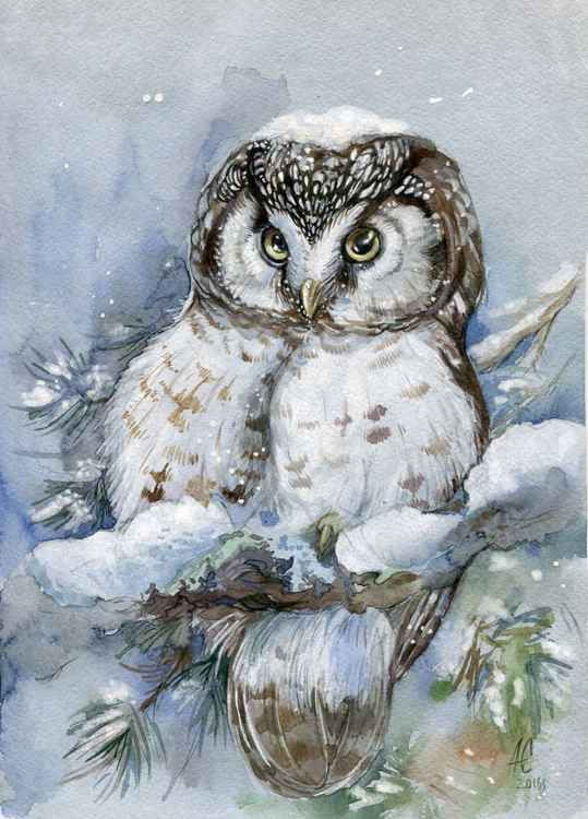 ORIGINAL WATERCOLOR  Boreal owl (Aegolius funereu) -