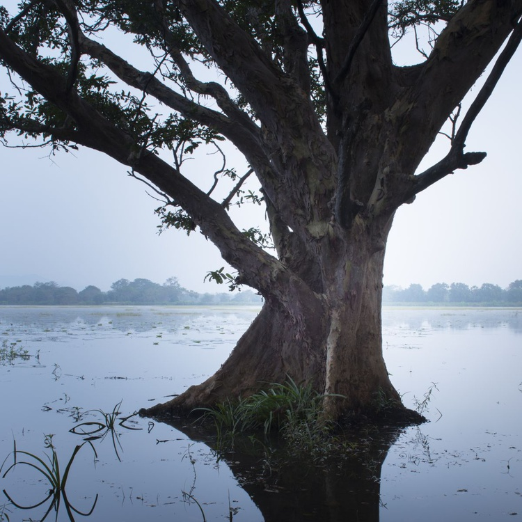 Sri Lanka 0051 - Image 0