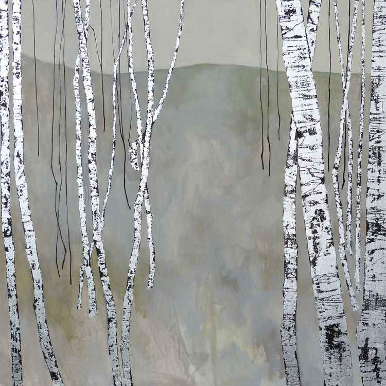Birch Trees - Early Morning -
