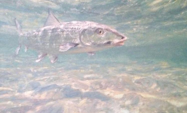 Shrimp Hunter - Image 0