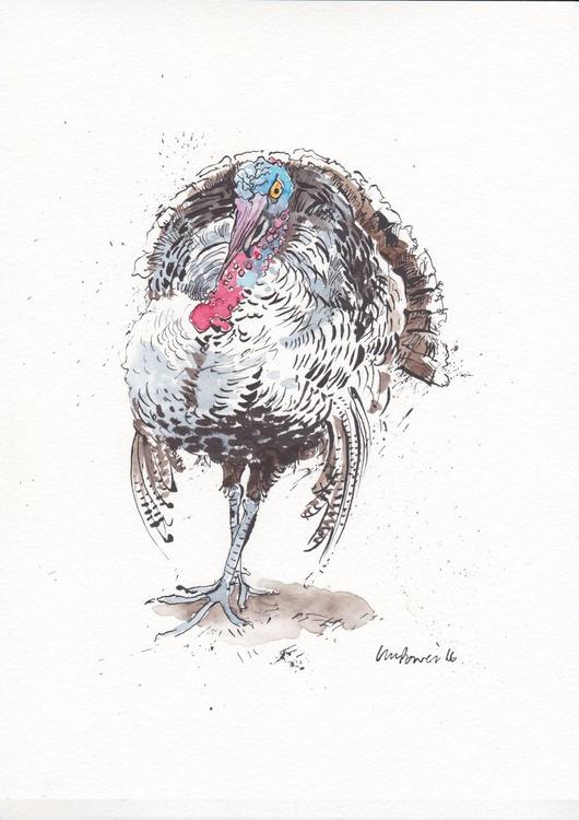 Posing Turkey - Daily Bird #36 - Image 0