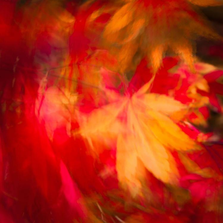 Autumn Bliss - Image 0