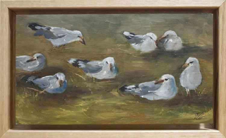 Seagulls-Stony Point -