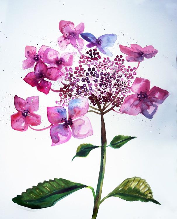 Hydrangea (Lacecap) - Image 0