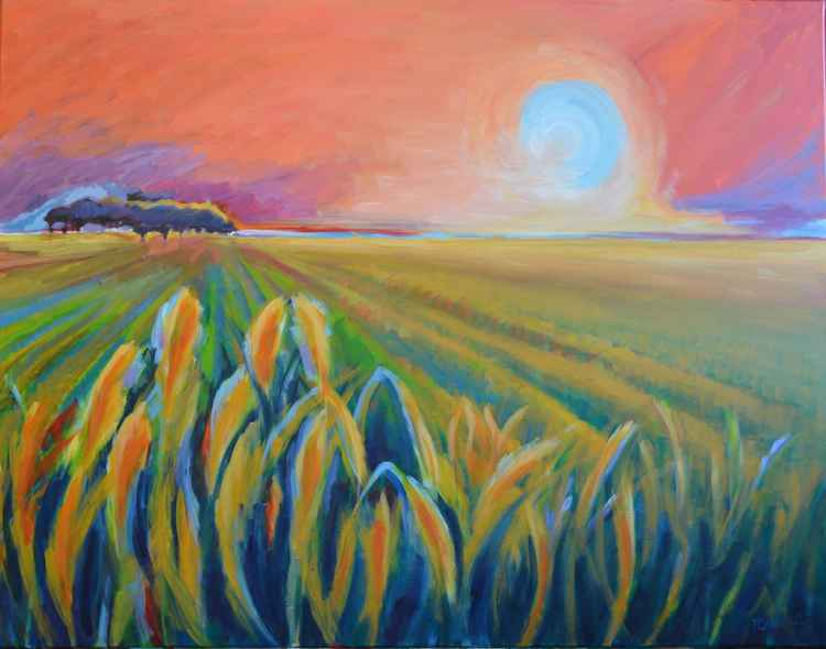 A Field -