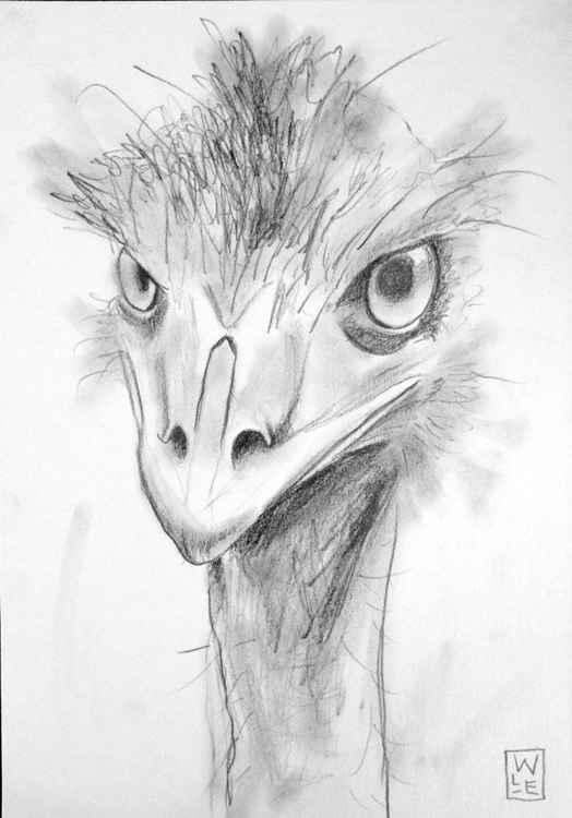 Emu -
