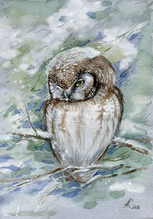 ORIGINAL WATERCOLOR  Boreal owl (Aegolius funereu)