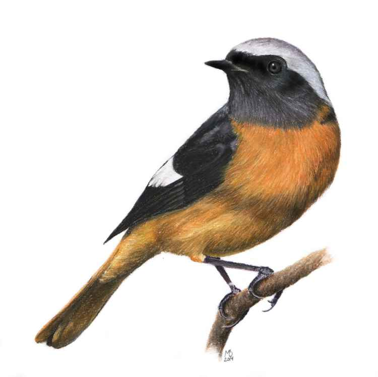 "Original pastel drawing ""Redstart"""