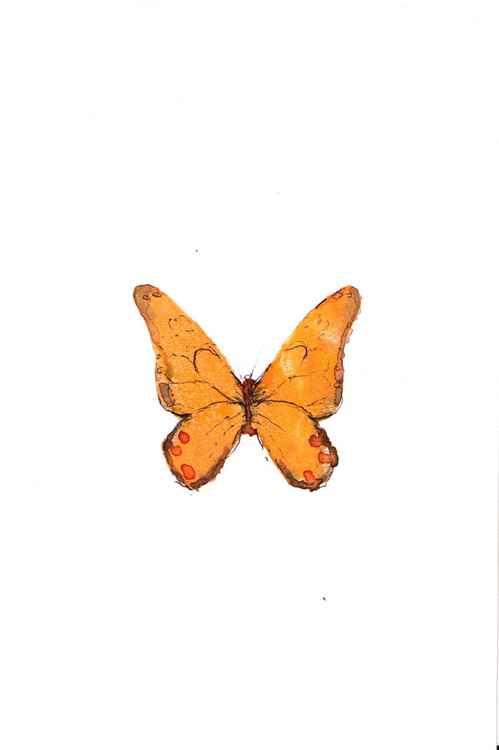 Butterfly 1015O2 -