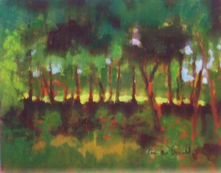 Trees at 5pm -