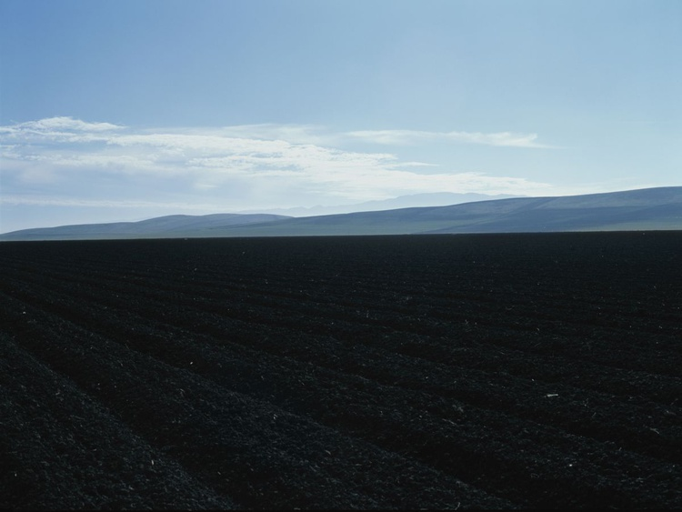 Spinach Field - Image 0