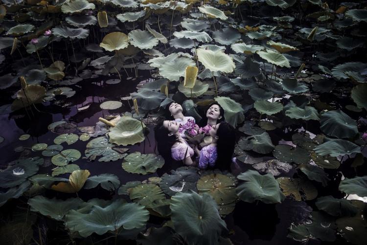 The Lotus Lake IV, Medium Edition - Image 0