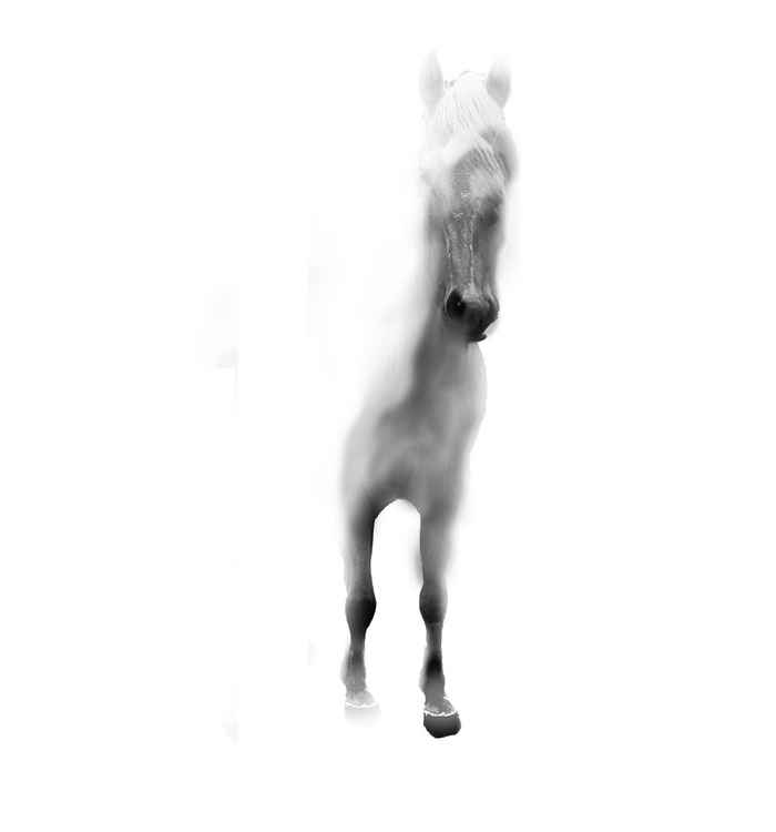 Horse in Fog *CAN BE CUSTOM SIZED FOR YOU.  CONTACT ARTIST*