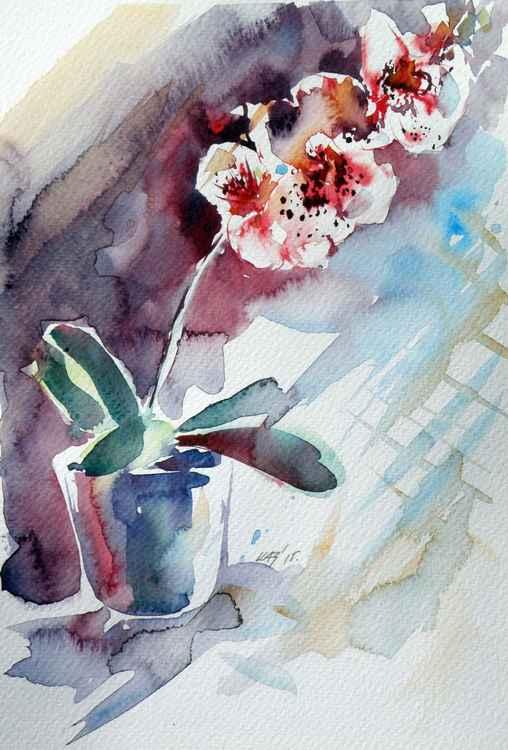 Orchidea -