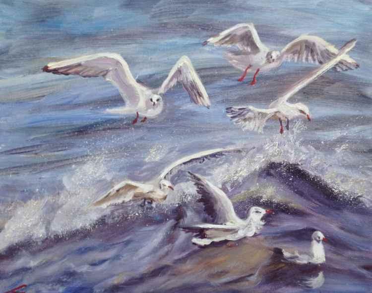Seagulls4 -