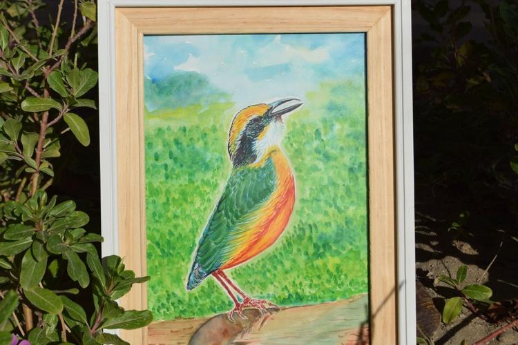 Indian Pitta Bird - Image 0