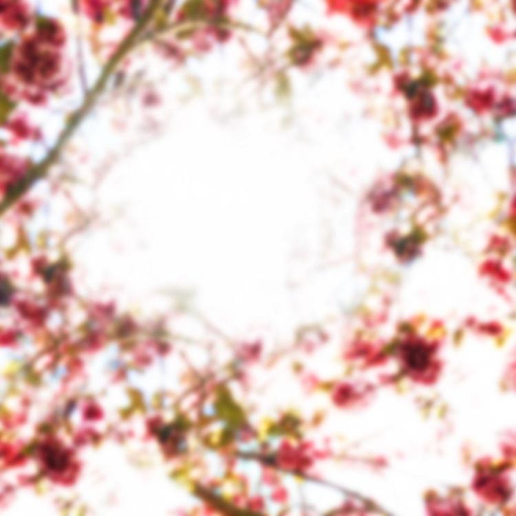 Petal (Phosphene Flowers Series) - Image 0