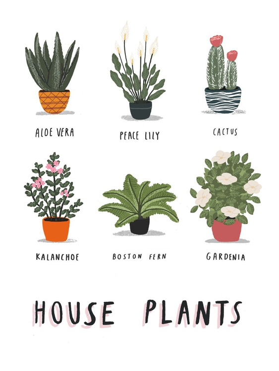 House Plants print (unframed) - Image 0