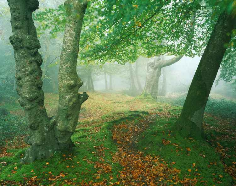 Mystical Forest -