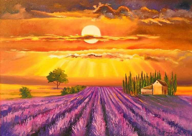 Sunset over lavender field - Image 0