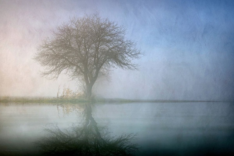 Alone with Nature - Canvas 75 x 50 cm - Image 0