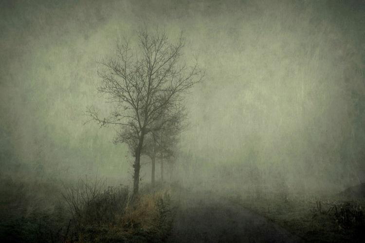 Eclipse - Canvas 75 x 50 cm - Image 0