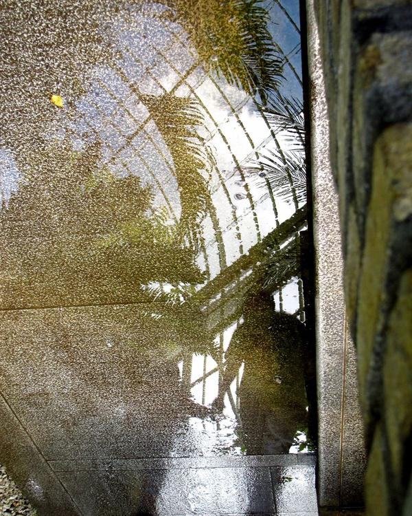 "DUBLIN Botanic Gardens no:2  (Limited edition  1/200) 10""X8"" - Image 0"