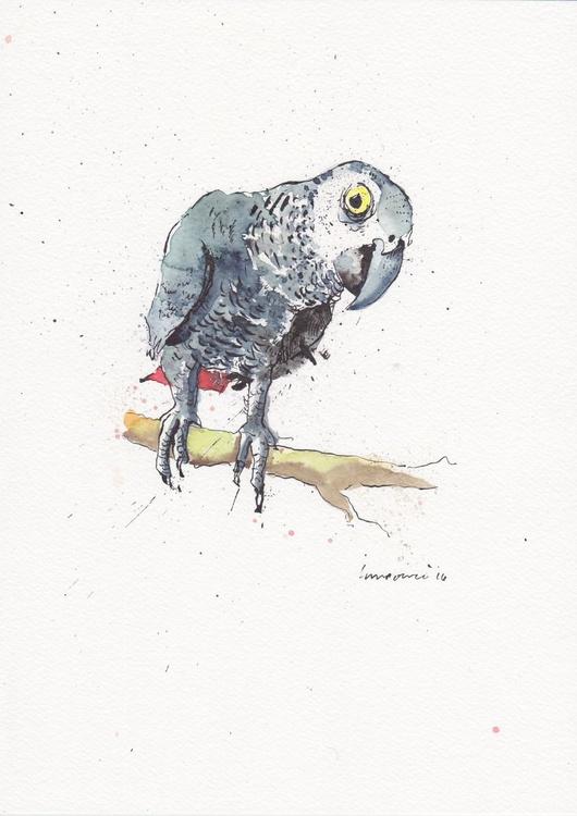 African grey Parrot - Daily Bird #56 - Image 0