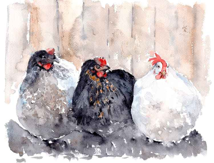 Chickens Three