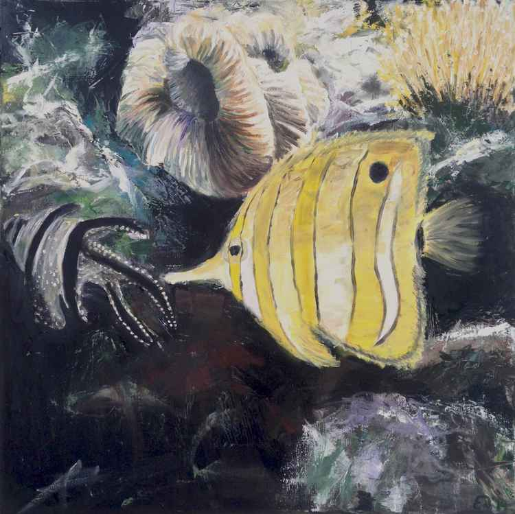 Butterfly fish -