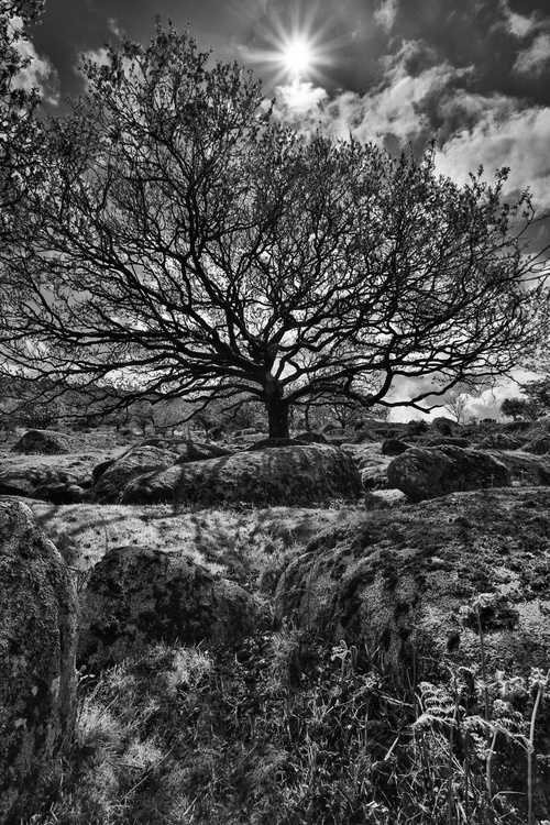Through the woods and into the sun on Bodmin Moor - Image 0