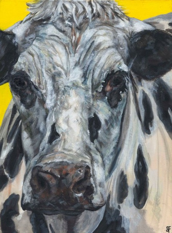 Moody Old Cow - Image 0
