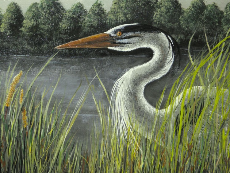 Heron in Tall Grass - Image 0