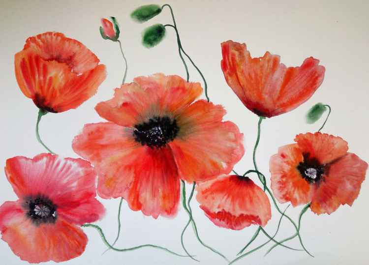 Poppy flowers  large 1 -
