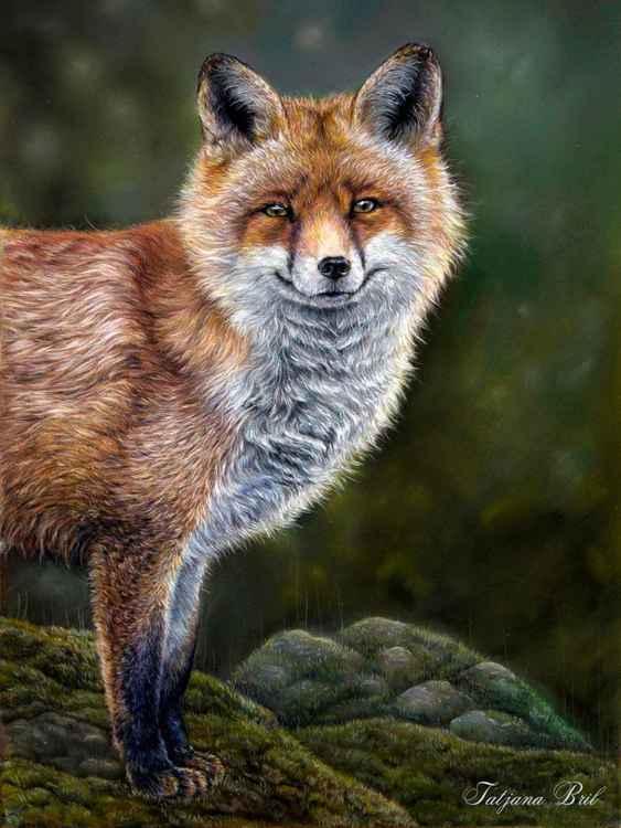 Smiling fox -