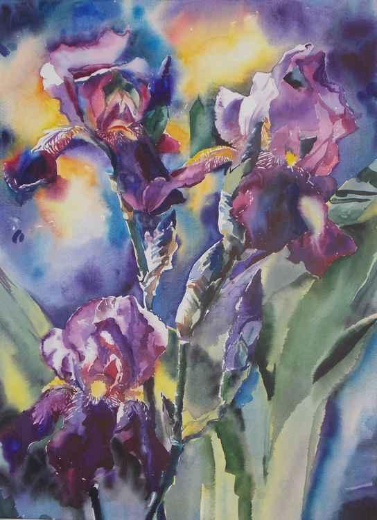 Irises -