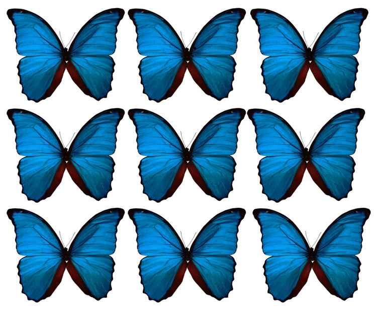 Big Blue -