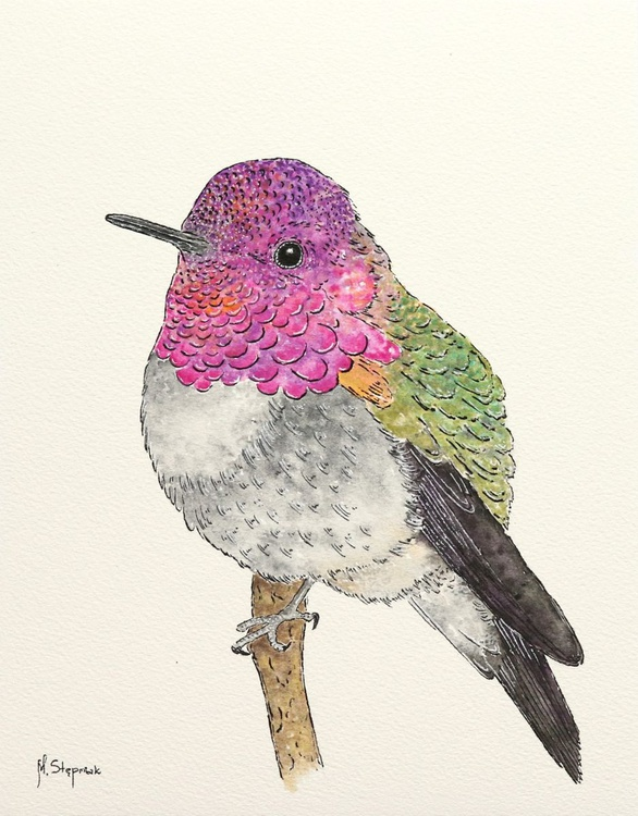 The hummingbird - Image 0