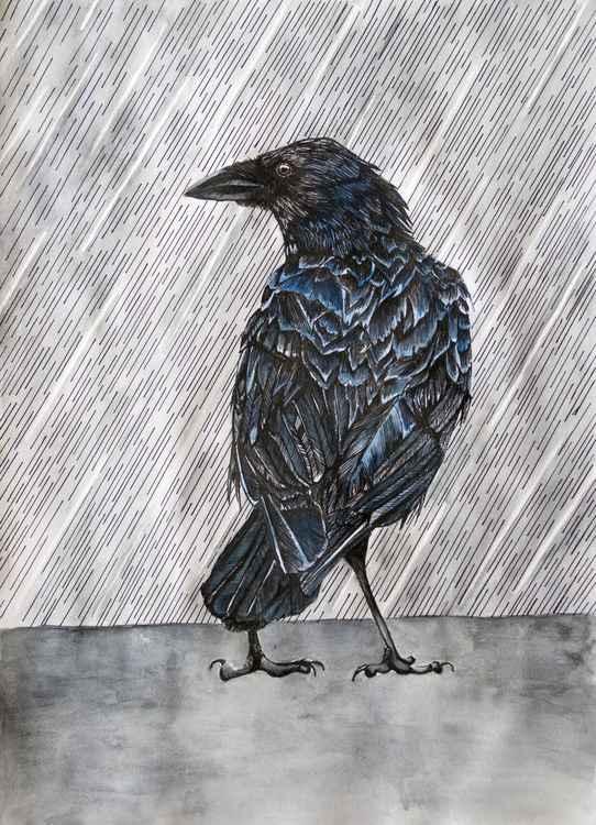 Raincrow -