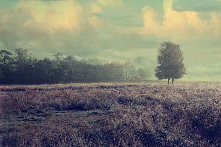 Whispering Fields  (Ltd Edition of only 35 Fine Art Giclee Prints from an original photograph)