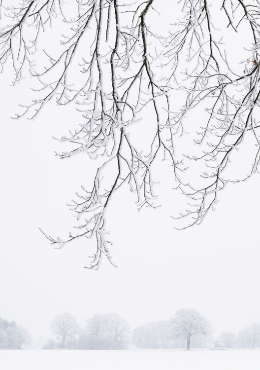 Frosty Branches. (42x59cm) - Image 0