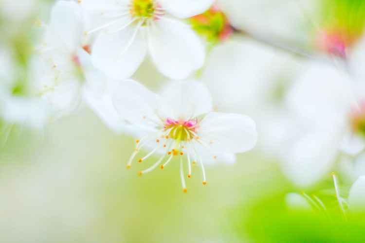 Aquarelle Spring I -