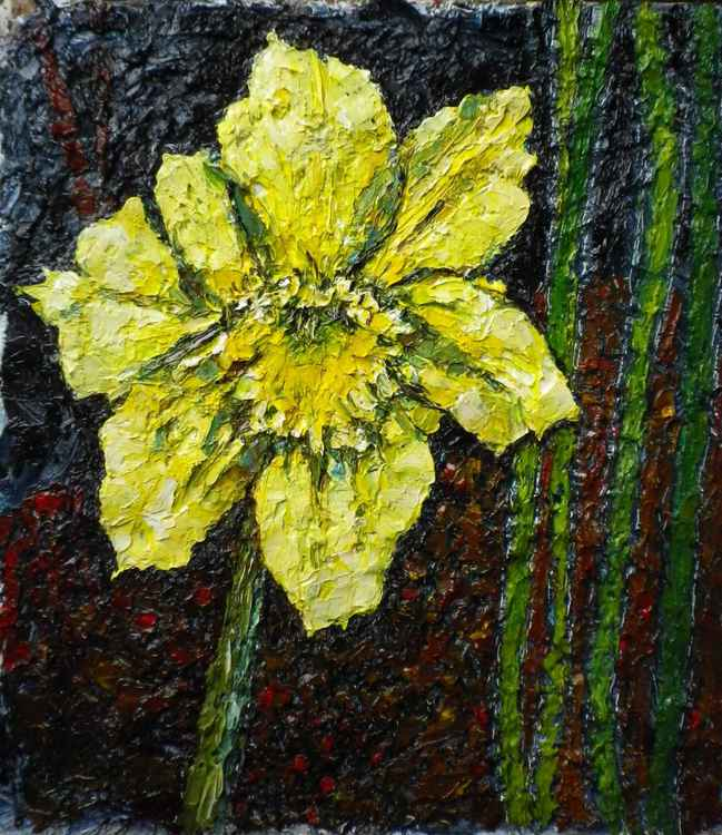 Single daffodil bloom -