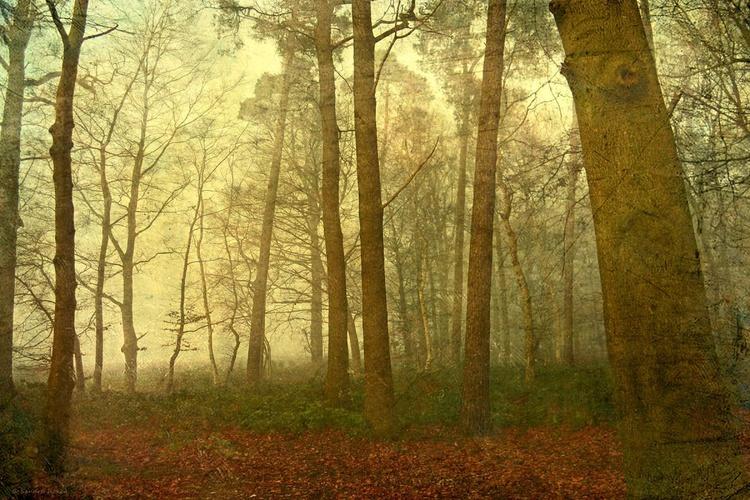 Autumn Lights - Image 0