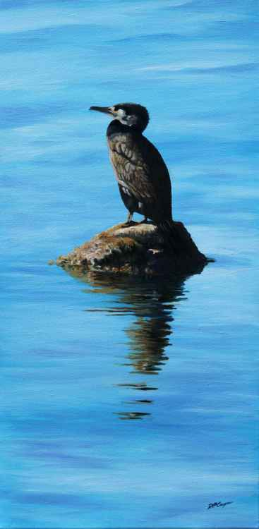 Cormorant reflections -