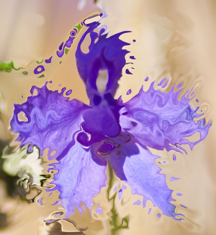 vanishing flower - Image 0