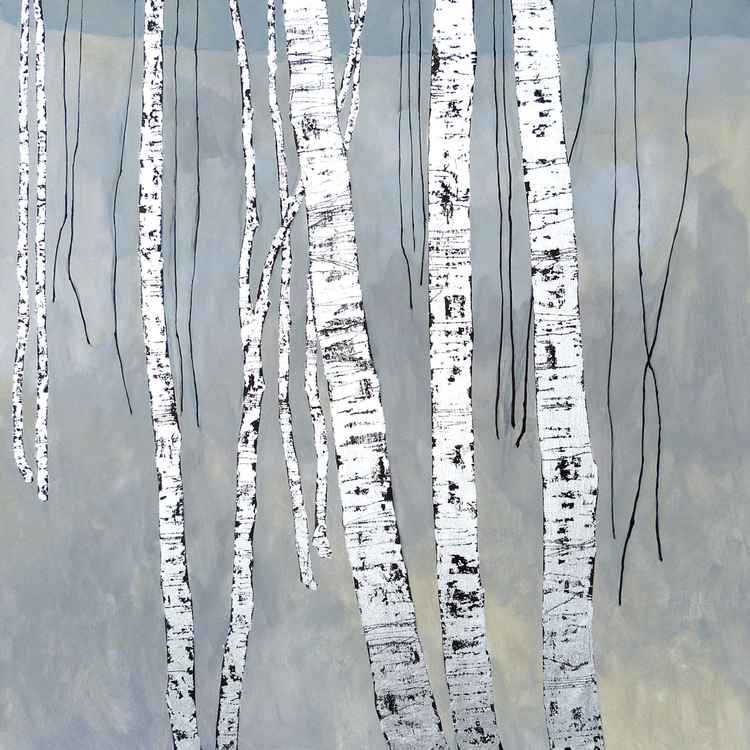 Birch Trees - At the Crossing -