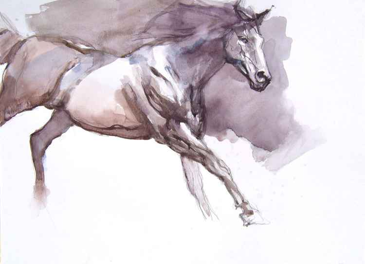 black stallion IV -
